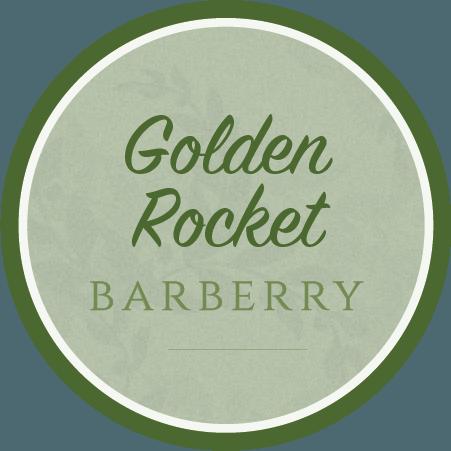 Golden Rocket Barberry